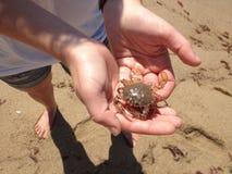 Crabe à disposition Photographie stock libre de droits