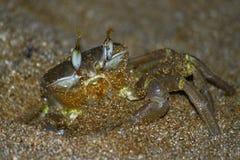Crabe à l'extérieur Photos libres de droits