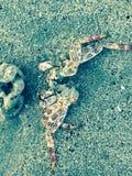 Crabe à la mer Images libres de droits