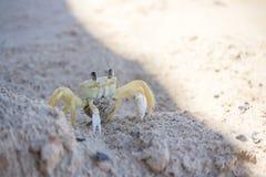 Crabe à la plage Photographie stock libre de droits