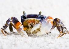 Crabe Photos stock