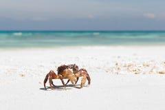 Crabe Image libre de droits