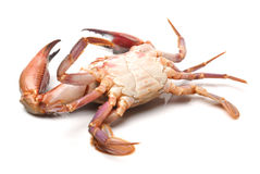 Crabe Photographie stock
