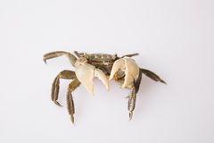 Crabe Images stock