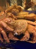 Crabe images libres de droits