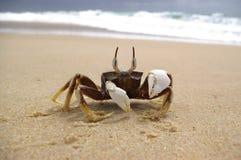 Crabe alerte Images libres de droits