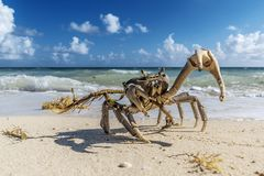Crabe au Cuba photos stock