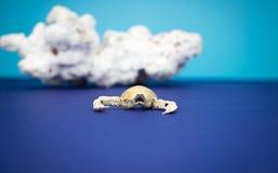 Crabe avec le corail Photographie stock libre de droits