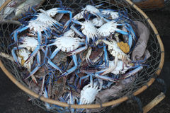 Crabe bleu à la poissonnerie de Dubaï Photographie stock