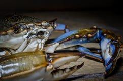 Crabe bleu avec la vue de côté de griffe Photos libres de droits