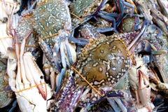 Crabe bleu de fleur sur un marché humide Images stock
