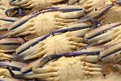 Crabe bleu frais Image libre de droits