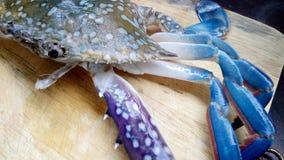 Crabe bleu frais Photo libre de droits