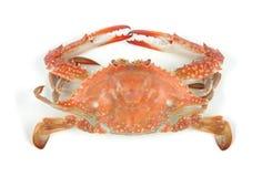 Crabe bouilli photo libre de droits