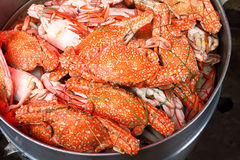 Crabe bouilli Photo stock
