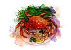 Crabe bouilli d'un plat avec les herbes et les tranches fraîches de citron, croquis Image libre de droits