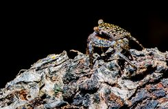 Crabe camouflé photos libres de droits
