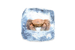 Crabe congelé, glace Photographie stock