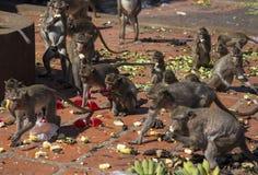 Crabe-consommation du fest de nourriture de Macaques, la Thaïlande Images libres de droits