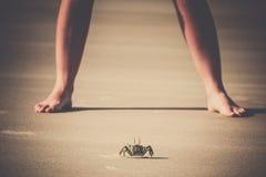 Crabe contre l'humain photographie stock libre de droits