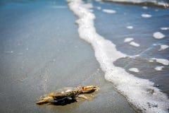 Crabe contre la vague Image libre de droits