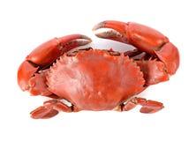 Crabe cuit à la vapeur photos libres de droits