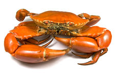 Crabe cuit de boue Photos stock