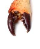 Crabe cuit de griffe photo stock