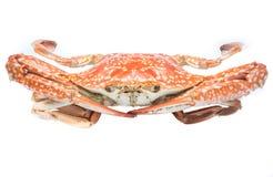 Crabe cuit à la vapeur Photographie stock libre de droits
