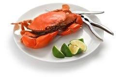 Crabe cuit à la vapeur de boue, mâle Image libre de droits