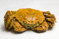 Crabe délicieux Photos libres de droits