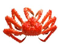 Crabe d'appétit Photo libre de droits