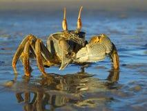Crabe d'ordinateur de secours photo libre de droits