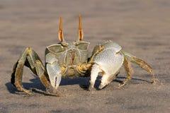 Crabe d'ordinateur de secours Photographie stock libre de droits