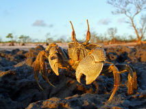 Crabe d'ordinateur de secours sur des roches Images stock