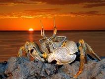 Crabe d'ordinateur de secours sur des roches Photos stock