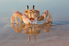 Crabe d'ordinateur de secours sur la plage Image stock