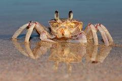 Crabe d'ordinateur de secours sur la plage photos stock