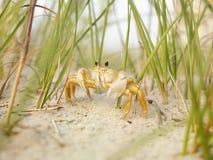 Crabe d'ordinateur de secours sur la plage. Photo libre de droits
