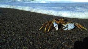 Crabe dans la plage Images stock
