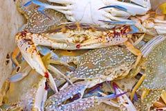Crabe dans le panier blanc Photographie stock libre de droits