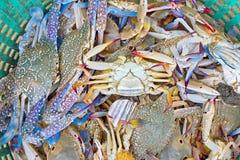 Crabe dans le panier vert Photo libre de droits
