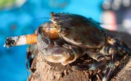 Crabe dans les stres avec la cigarette, Goa, Inde Image libre de droits