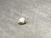 Crabe dans son interpréteur de commandes interactif Photo stock