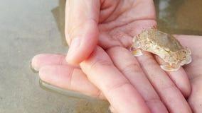Crabe de bébé photos libres de droits
