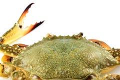 Crabe de carapace images stock