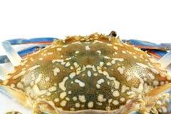 Crabe de carapace photographie stock