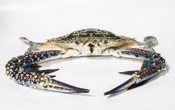 Crabe de cheval Images libres de droits