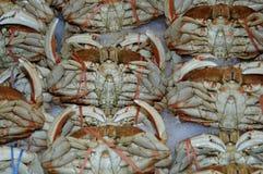 Crabe de Dungeness frais Images libres de droits