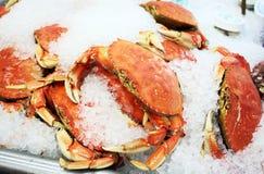 Crabe de Dungeness frais sur la glace Image libre de droits